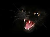 cat-hissing