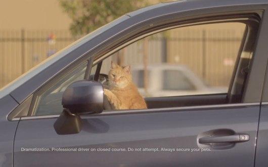 2014-subaru-forester-cat-driving-car