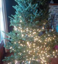 half-lit tree