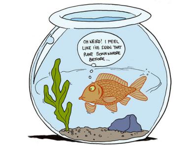 déjà vu goldfish
