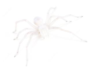 white spider on white tile