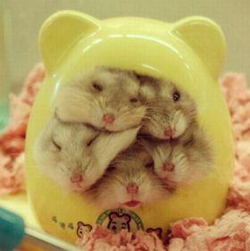 hamster hut