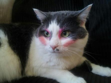cat with makeup