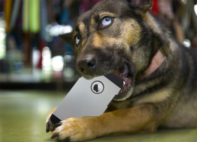 dog chewing on iPhone