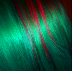 red and green Christmas hair