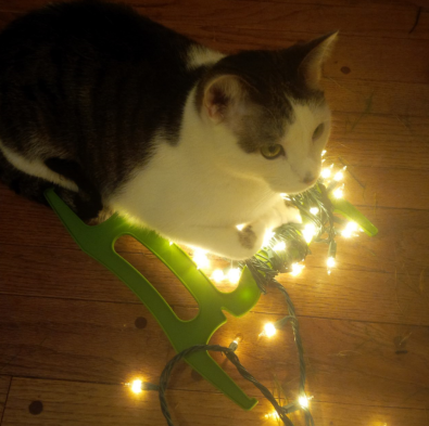 kitty and christmas lights
