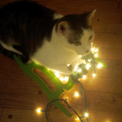 kitty and christmas lights