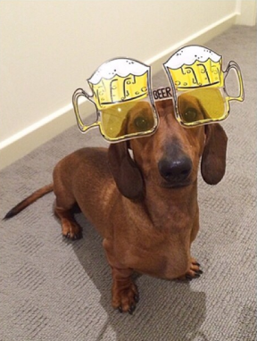 dog wearing novelty beer glasses