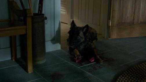 Dog eating... Gerald