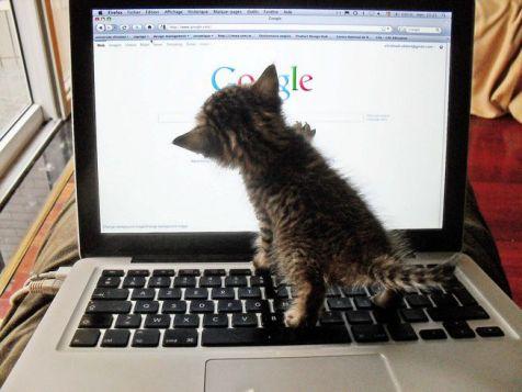kitten on laptop, pawing at google homepage