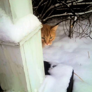 Ham (large, orange, fluffy) peeking out from around a post at this new landscape