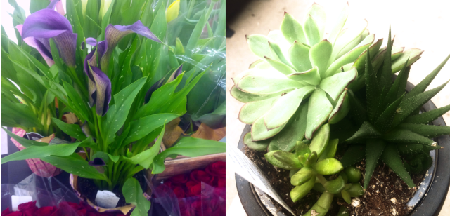 Left: a purple calla lily plant; right: a cluster of small succulents.