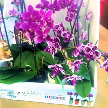 Display of tiny baby orchids for sale. $9.99 USD each.