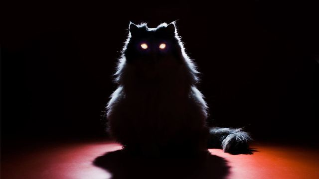 grey cat sitting in shadow, eyes glow in dark.
