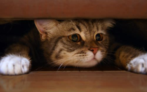 scared tabby cat hiding under couch