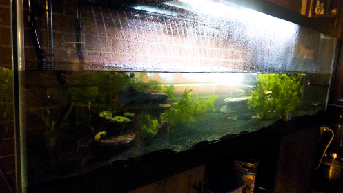 long aquarium with black sand and live plants, half full of water